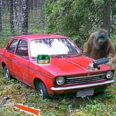 The Briliant Orangutan